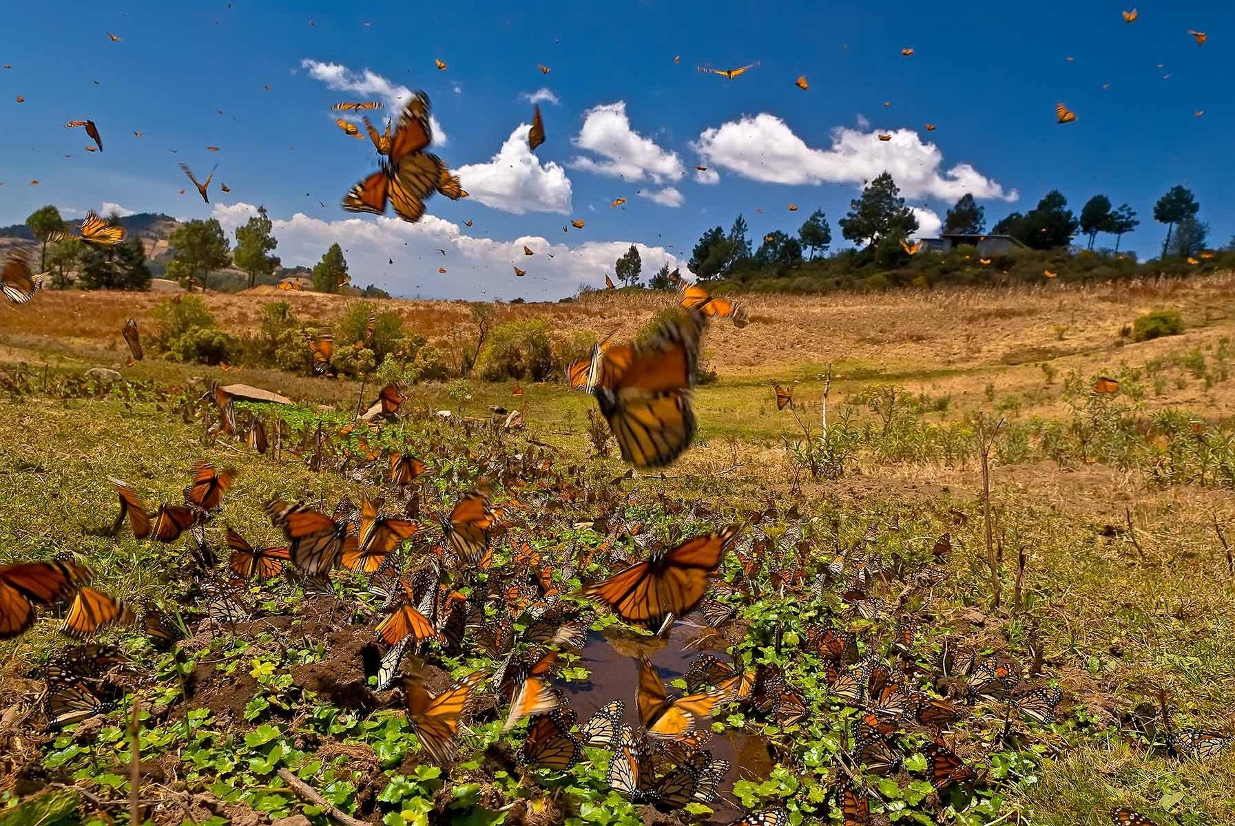 Resultado de imagen para mariposa monarca y de las luciérnagas
