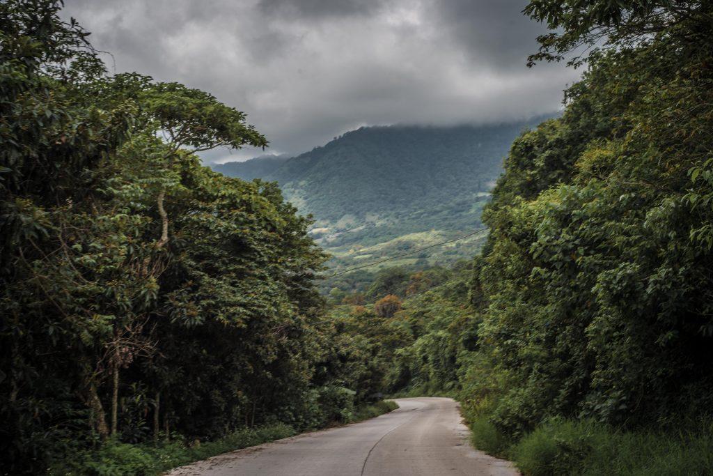 Las tierras del Municipio de Alto Lucero están dedicadas de forma casi exclusiva al cultivo del café.