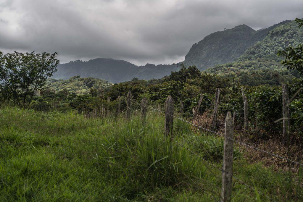 Este lugar goza de situaciones climáticas privilegiadas para el cultivo del café ya que según la temporada en la cual lo visites puedes encontrar calores intensos o fríos extremos.