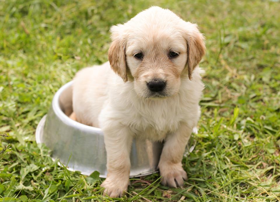 Puppy perro adopción