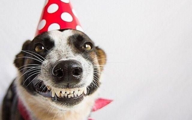 Fiestas para perrito