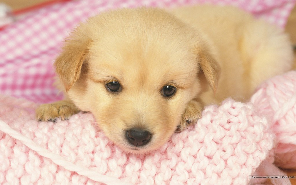 mascota perro cachorro