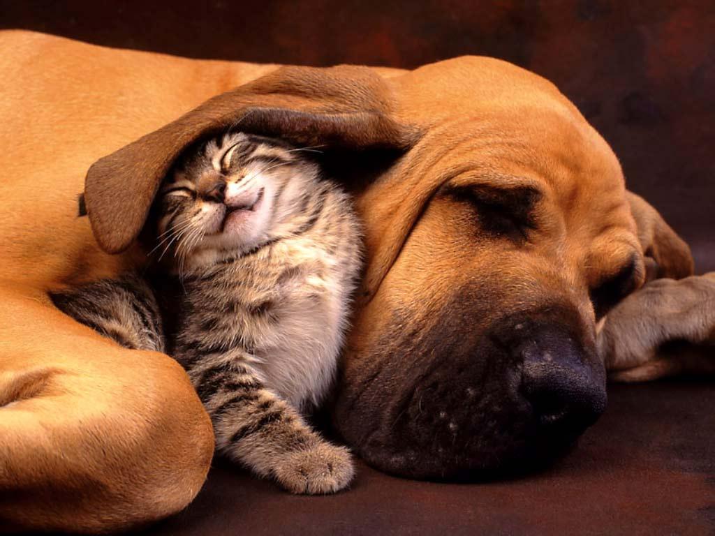 esterilización perros gatos