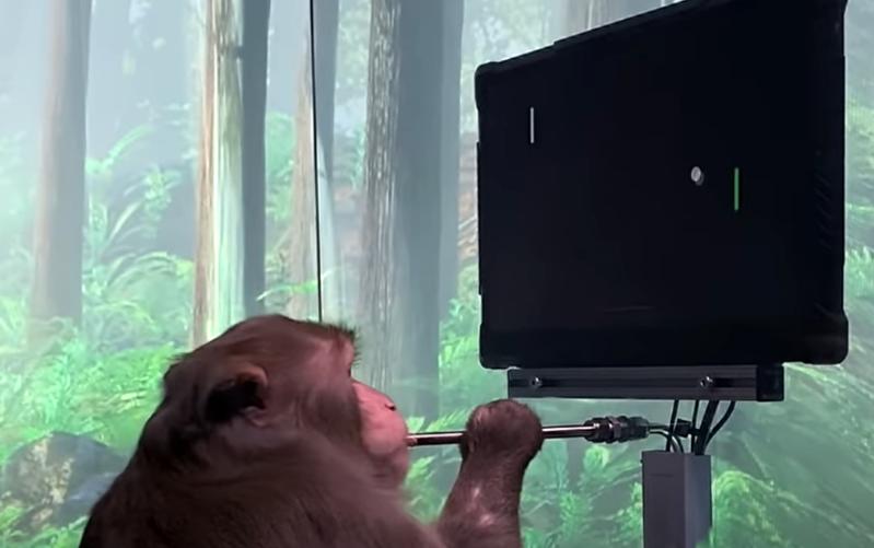 un mono